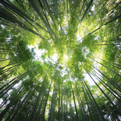Une forêt primaire en Europe
