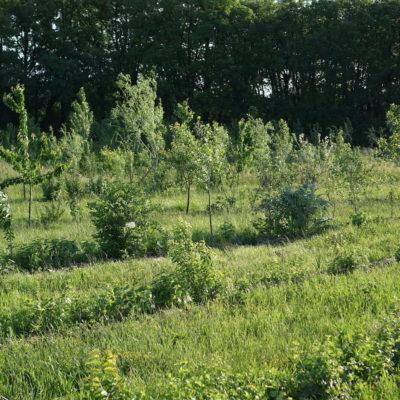 L'art de cultiver avec les arbres