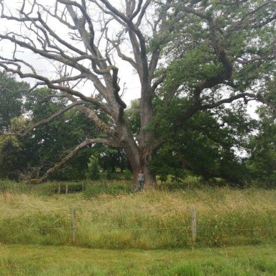 Quand les arbres meurent dans l'indifférence