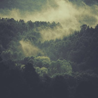 Laisser faire la Nature pour sortir de l'impasse climatique