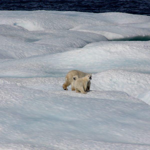 Crise écologique : « on sait, mais on ne fait rien »