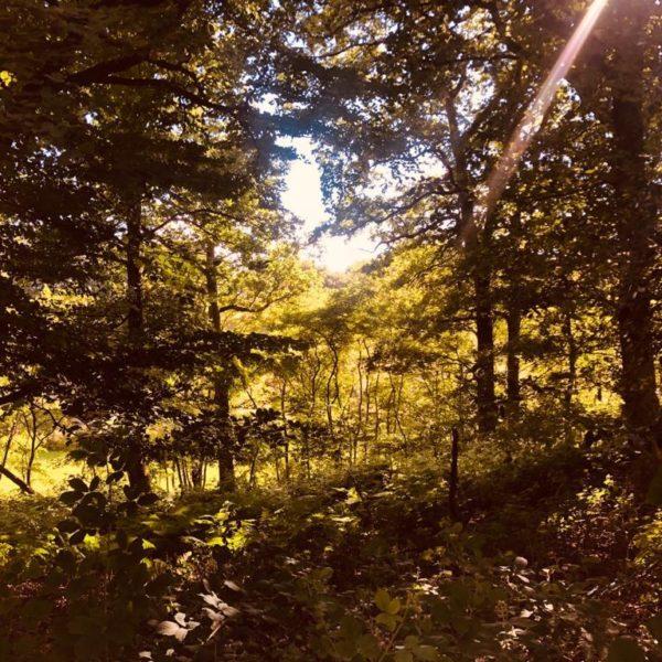 « Respecter la nature, cela passe par le respect de l'autre. » Thomas Bouvatier, psychanalyste